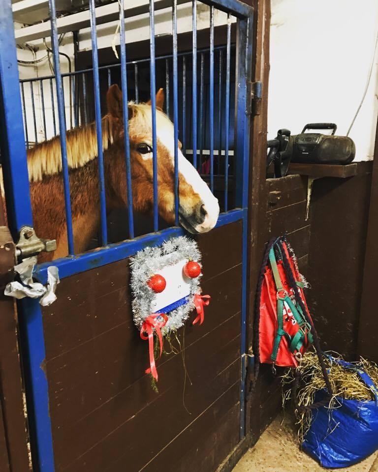 Småtjejerna har julpyntar fint i ponnystallet och Pajas försöker få tag på pyntet..